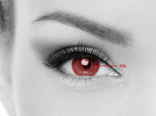 Iris scanner eye diagram